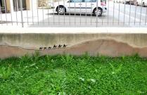 La Street Art di Oakoak (11)
