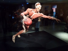Body Worlds – The Cycle of Life (12)