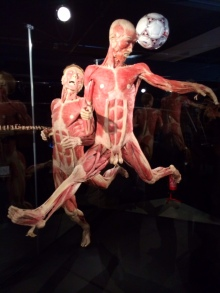Body Worlds – The Cycle of Life (14)
