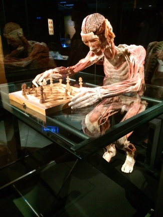 Body Worlds – The Cycle of Life (3)