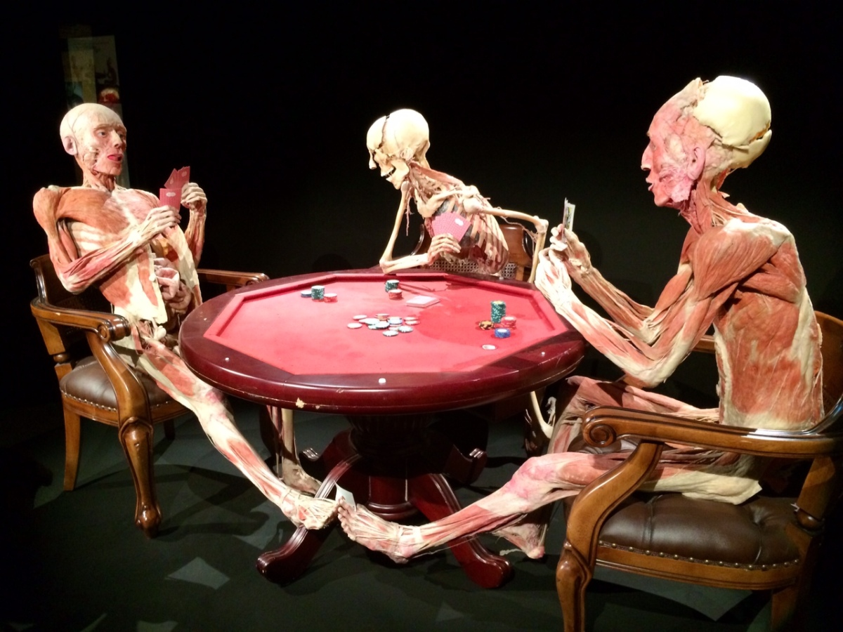 body worlds and the cycle of Body worlds & the cycle of life will no doubt give you a perspective on human anatomy that you might never have otherwise seen torvald hessell is the executive director and president of the texas .