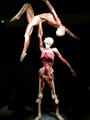 Body Worlds – The Cycle of Life (7)