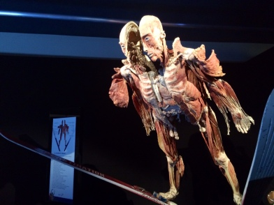 Body Worlds – The Cycle of Life (9)