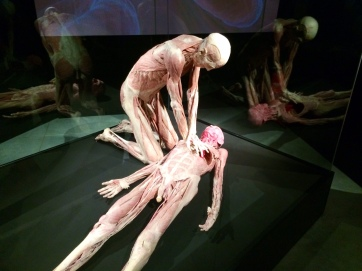 Body Worlds – The Cycle of Life