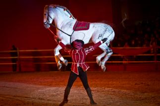 cordoba equestre Robbi Hüner